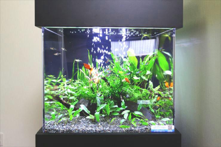 おしゃれでかわいい! キューブ水槽の設置事例をご紹介します 水槽画像3