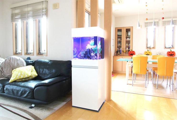 神奈川県 個人宅のリビング 45cm海水魚水槽 設置事例