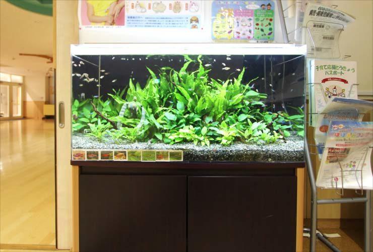葛飾区 保育園 90cm淡水魚水槽設置 その後 メイン画像