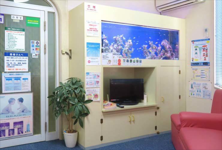 歯科医院 待合室 180cm大型淡水魚水槽 リニューアル事例 水槽画像1