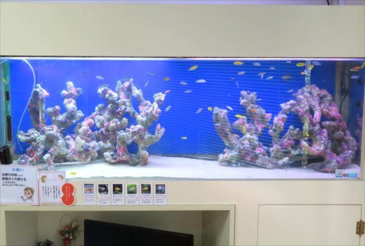 歯科医院 待合室 180cm大型淡水魚水槽 リニューアル事例 水槽画像2
