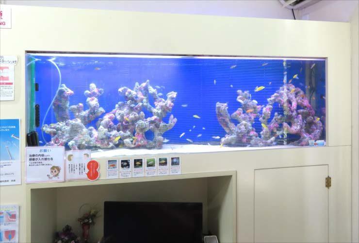 歯科医院 待合室 180cm大型淡水魚水槽 リニューアル事例 水槽画像3