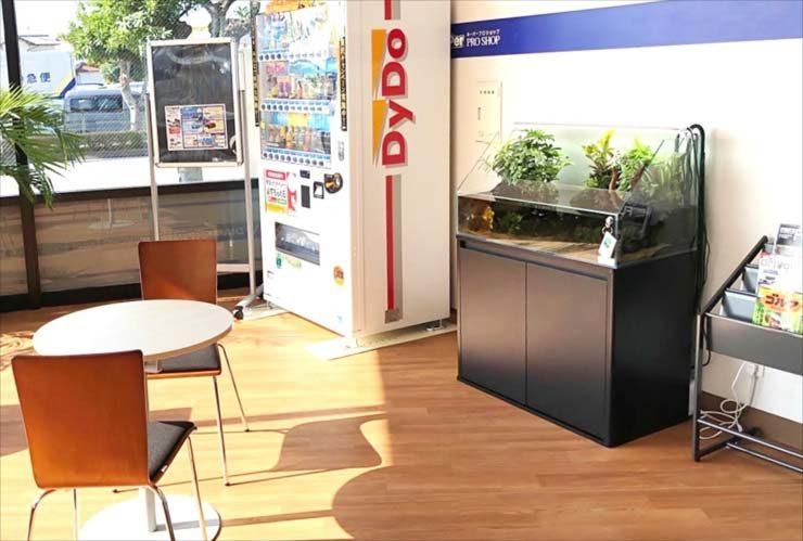 ガソリンスタンド 店内に設置 90cmアクアテラリウム水槽 設置事例 水槽画像3