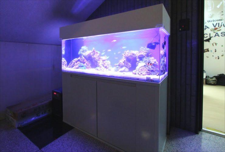 港区 インターナショナルスクール 120cm海水魚水槽 設置事例 メイン画像