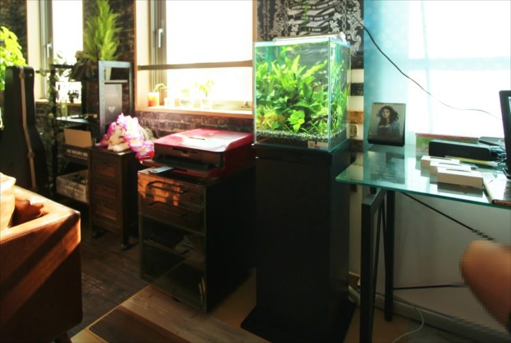 横浜 オフィスに設置 30cm淡水アクアリウム お試し水槽事例 メイン画像