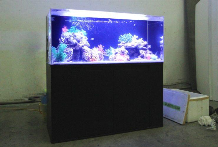 調布市 スタジオ 雑誌撮影 短期水槽レンタル事例 メイン画像