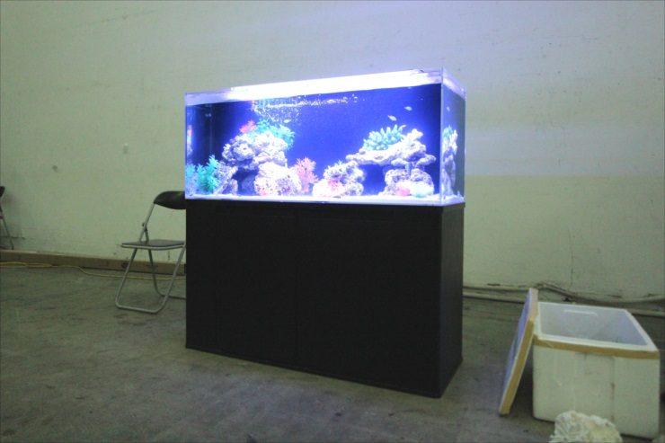 調布市 スタジオ 雑誌撮影 短期水槽レンタル事例 水槽画像3