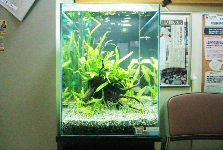 神奈川県 川崎市 介護施設 30cm淡水魚水槽 設置事例 水槽画像1