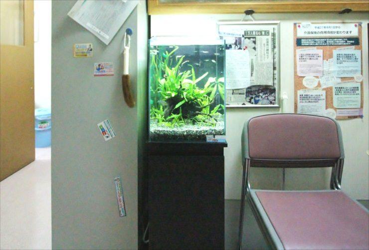 神奈川県 川崎市 介護施設 30cm淡水魚水槽 設置事例 水槽画像3
