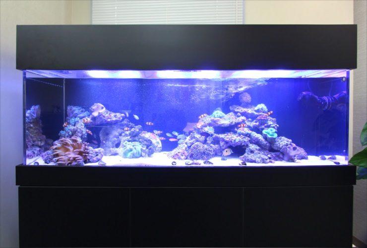 フォーサイドフィナンシャルサービス株式会社様 150cm海水サンゴ水槽 その後 メイン画像