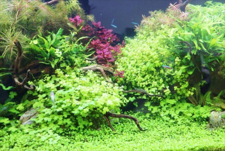 美しい水草水槽 水草レイアウト事例をご紹介します メイン画像