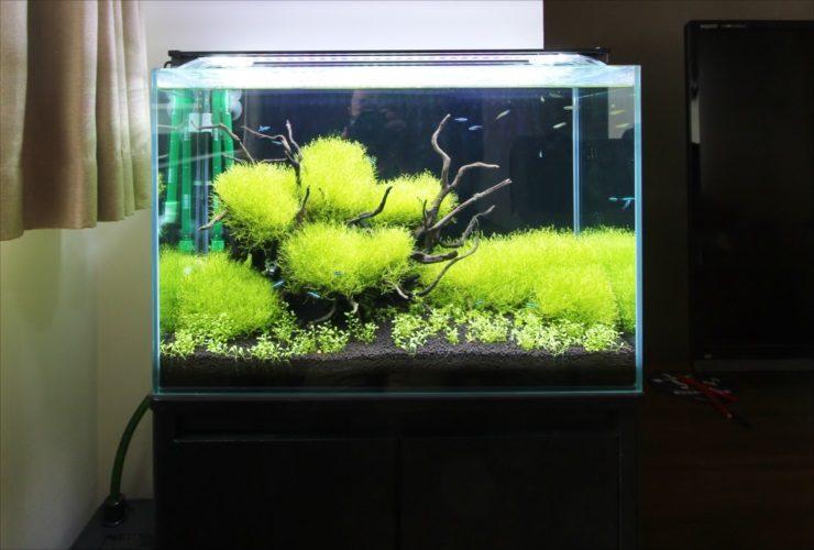 個人宅のリビングに設置 60cm淡水魚水槽 水草レイアウト事例 水槽画像1