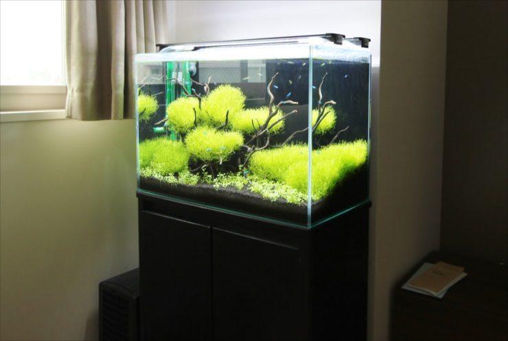 個人宅のリビングに設置 60cm淡水魚水槽 水草レイアウト事例 水槽画像3