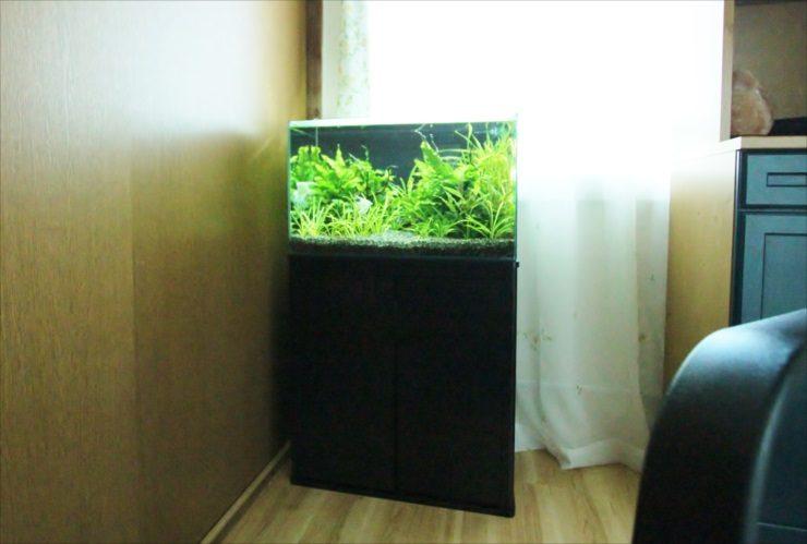 中野区 個人宅のリビング 60cm淡水水草アクアリウム事例 メイン画像
