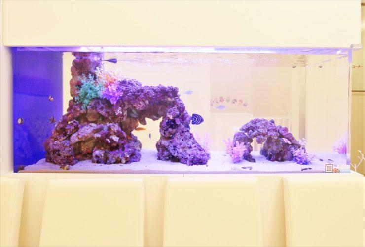立川市 歯科クリニックの待合室 大型海水アクアリウム 設置事例 水槽画像2