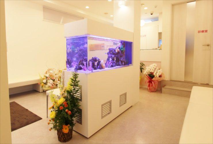 立川市 歯科クリニックの待合室 大型海水アクアリウム 設置事例 水槽画像3