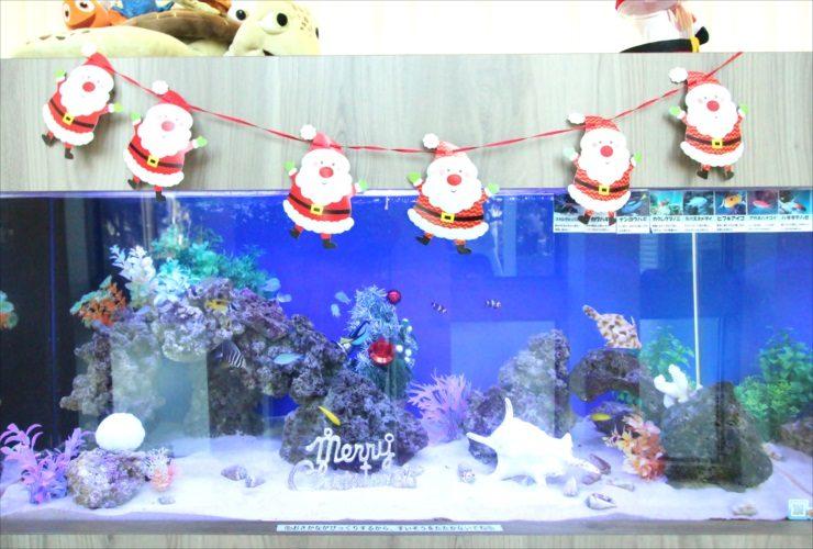 千葉県 歯科クリニックに設置 120cm海水魚水槽 クリスマスレイアウト事例 水槽画像2