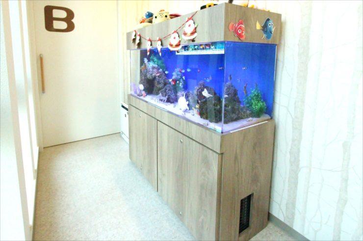千葉県 歯科クリニックに設置 120cm海水魚水槽 クリスマスレイアウト事例 水槽画像3