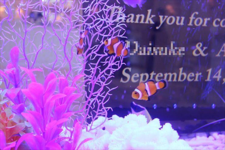 カクレクマノミの水槽事例特集 かわいいニモは大人気の熱帯魚です 水槽画像2