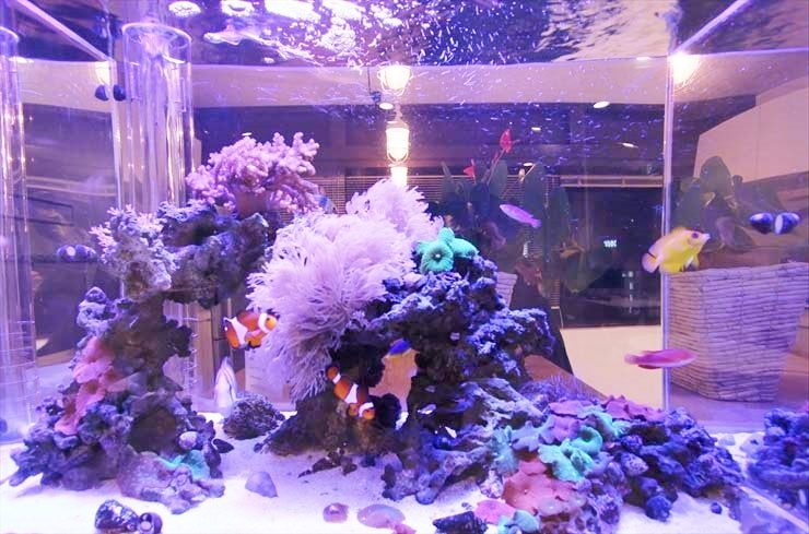 カクレクマノミの水槽事例特集 かわいいニモは大人気の熱帯魚です 水槽画像3