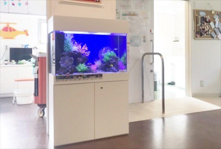 世田谷区 小児科の待合室に設置 海水魚水槽 レイアウトリニューアル事例 メイン画像