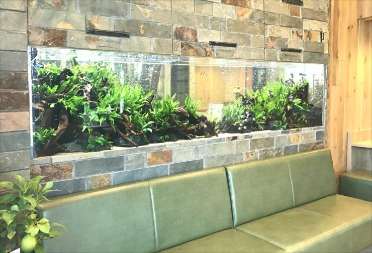 薬局の待合室 壁埋め込み型 大型淡水魚水槽 設置事例 水槽画像2