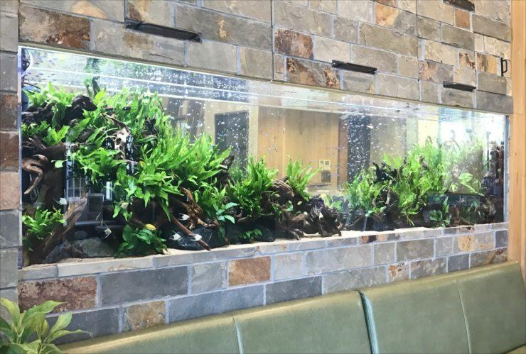 薬局の待合室 壁埋め込み型 大型淡水魚水槽 設置事例 水槽画像3