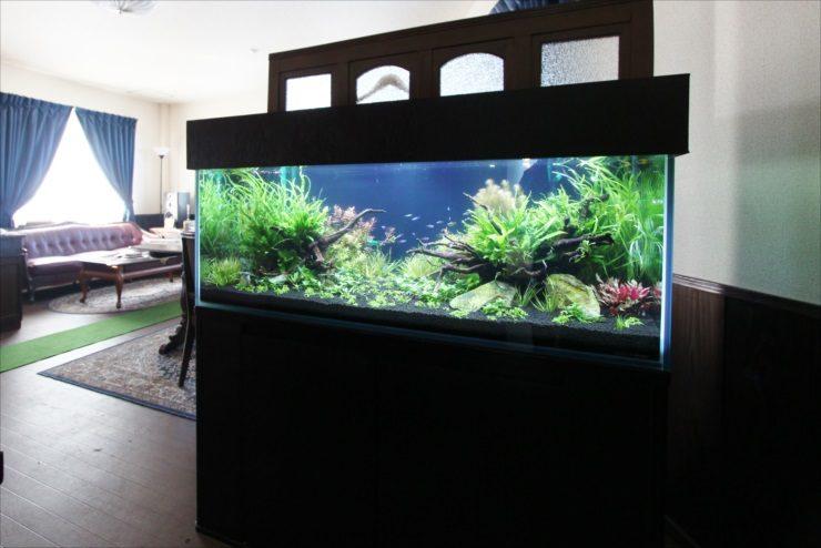 埼玉県 オフィス事務所 水槽移設 120cm淡水魚水槽 設置事例 メイン画像