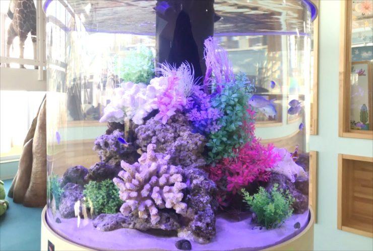 荒川区 保育園 大型円柱水槽 レイアウトリニューアル事例 水槽画像2