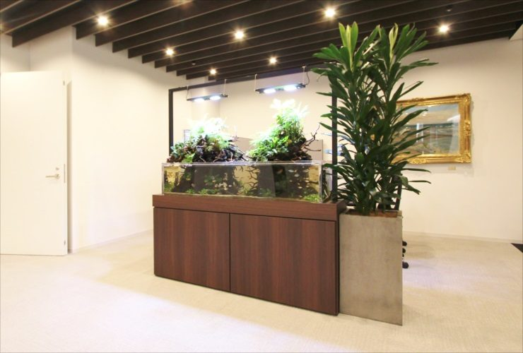 オフィスのエントランスに設置 大型アクアテラリウム水槽 その後の様子 水槽画像3