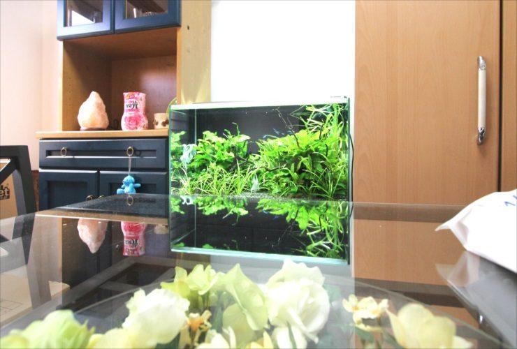 中野区 個人宅のリビングに設置 60cm淡水魚水槽 レイアウト事例 メイン画像
