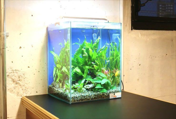 中央区 オフィス 30cm淡水アクアリウム お試し水槽設置事例 メイン画像