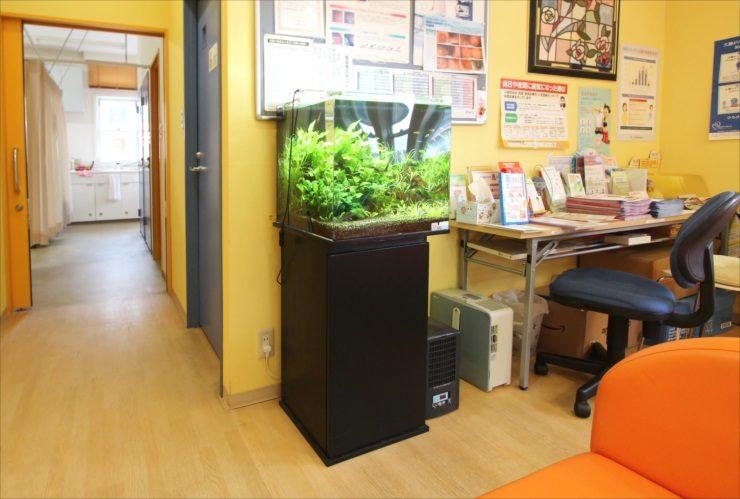 神奈川県 川崎市 クリニックの待合室 45cm淡水魚水槽 設置事例 メイン画像