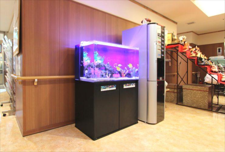 練馬区 特別養護老人ホーム 90cm海水魚水槽 設置事例 水槽画像2