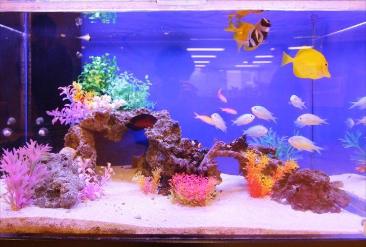 練馬区 特別養護老人ホーム 90cm海水魚水槽 設置事例 水槽画像3