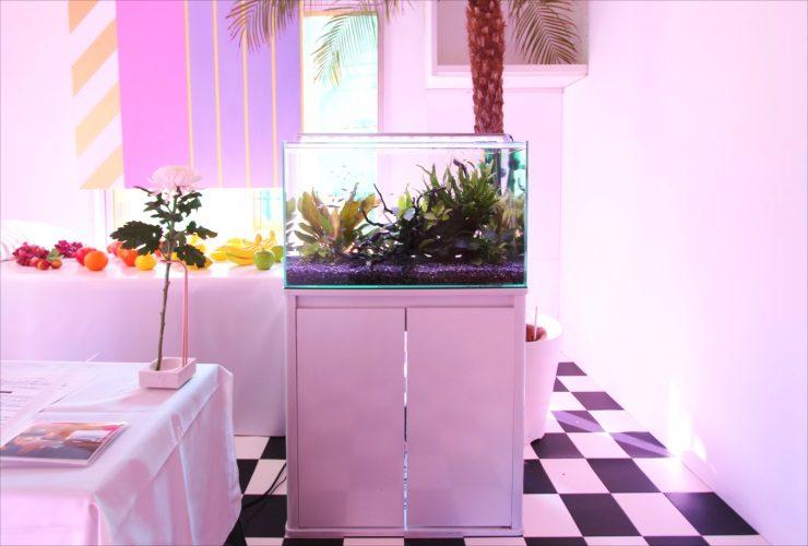 品川区 展示会イベント 60cm淡水魚水槽 短期レンタル事例 水槽画像2
