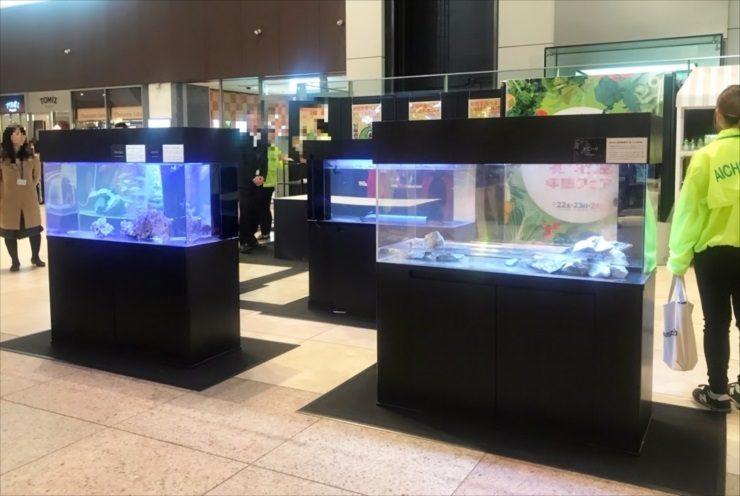 イベント様 生体展示水槽