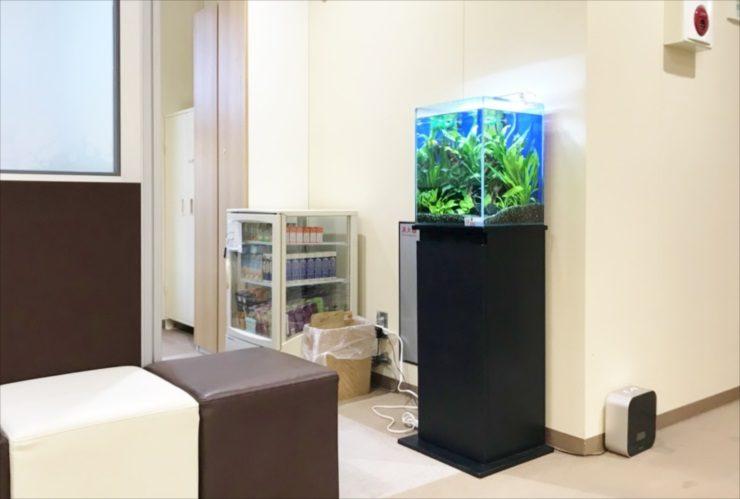神奈川県 産婦人科クリニックの待合室 30cm淡水魚水槽(お試し水槽)設置事例 メイン画像