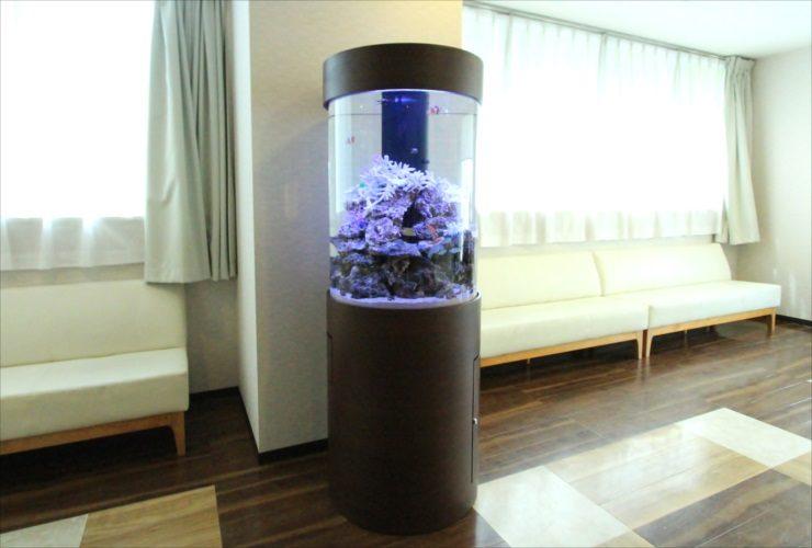 横浜 内科皮膚科の待合室 大型円柱アクアリウム 水槽設置事例 水槽画像2