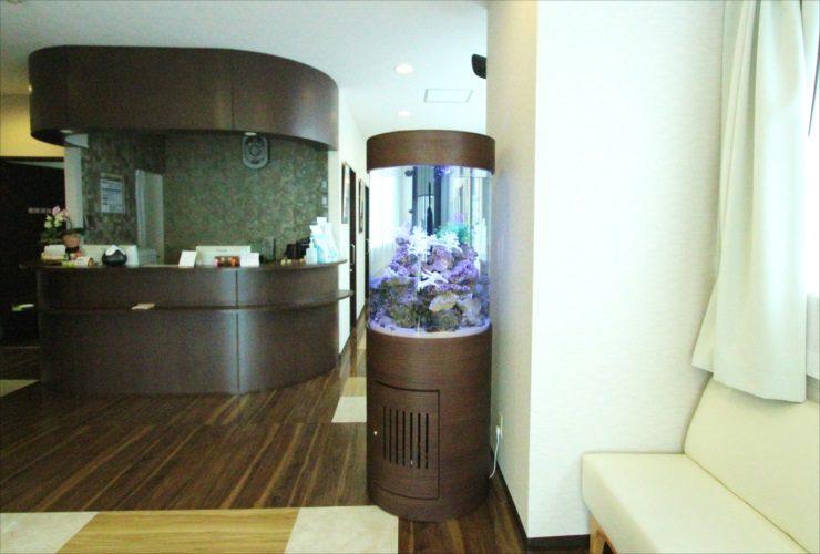 横浜 内科皮膚科の待合室 大型円柱アクアリウム 水槽設置事例 水槽画像3
