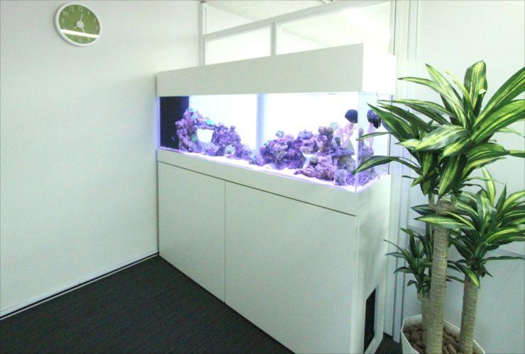 神奈川県相模原市 オフィス事務所 180cm海水魚・サンゴ水槽 設置事例 メイン画像