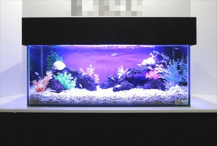 港区赤坂 オフィスのエントランス 90cm淡水魚水槽 設置事例 メイン画像