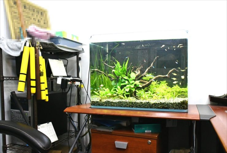 葛飾区 オフィス事務所 60cm淡水魚水槽 リニューアル・メンテナンス事例 メイン画像