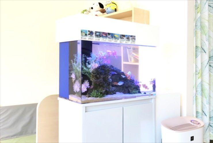 立川市 クリニックの待合室 60cm海水魚水槽 レイアウトリニューアル メイン画像