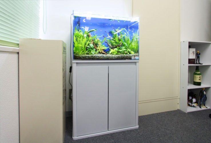 港区赤坂 オフィス事務所 60cm淡水魚水槽 設置事例 メイン画像