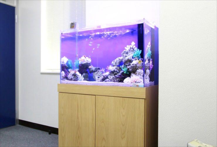 新宿 オフィス 水槽入替 90cm海水魚水槽 設置事例 メイン画像