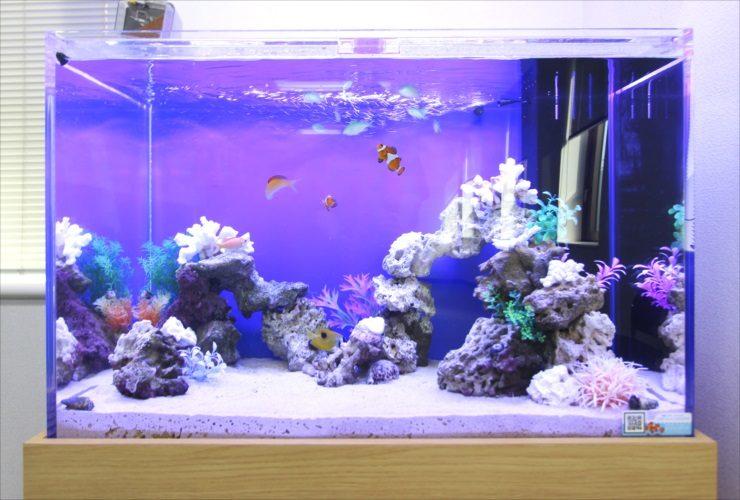 水槽レンタルサービス 海水魚水槽