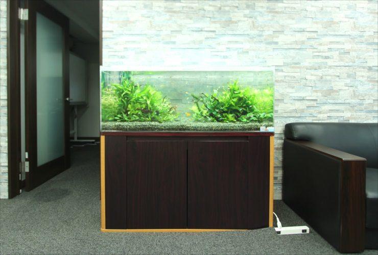 横浜 オフィス事務所に設置 華やかな120cm淡水魚水槽事例 メイン画像