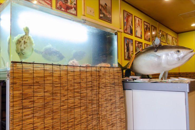 釣り居酒屋 季の扉様 120cm活魚水槽 その後の様子をご紹介 メイン画像