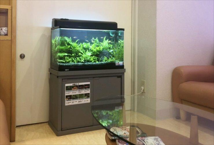 品川区 クリニックの待合室 水草レイアウト リニューアル事例 メイン画像